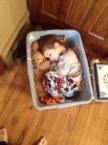basket of cuteness