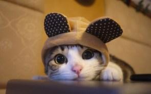 Bunny Cat