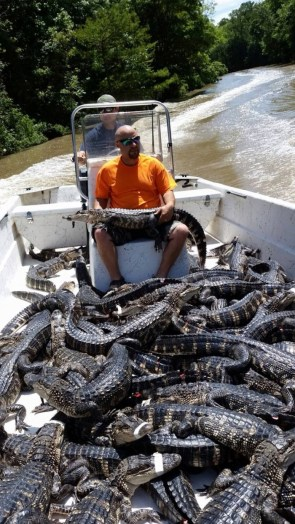 Gator Boat