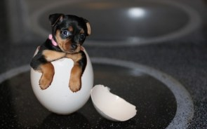 Puppy Egg
