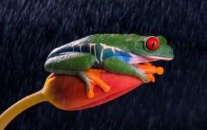 Smirky Frog