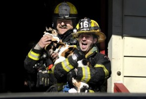 Cat Fire Rescue