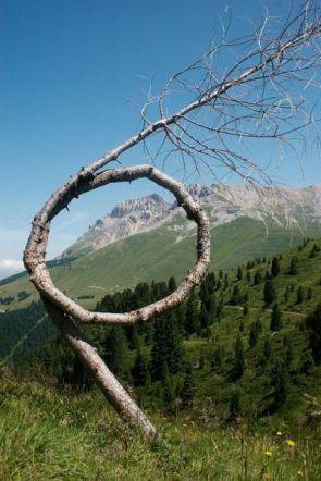 Circular Tree