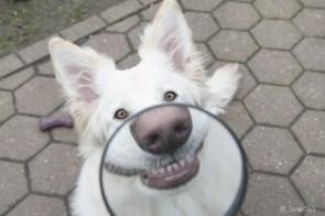 Dog Mouth