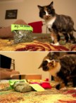 Cat Drugs