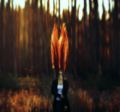 Fire tree hair
