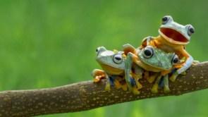 Frog Line Up