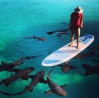 Shark paddle board