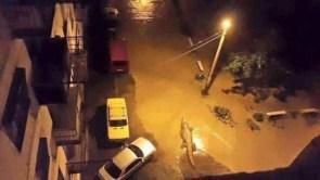 street gator