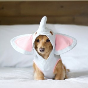 Elephant Puppy