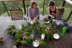 Parrot Dinner