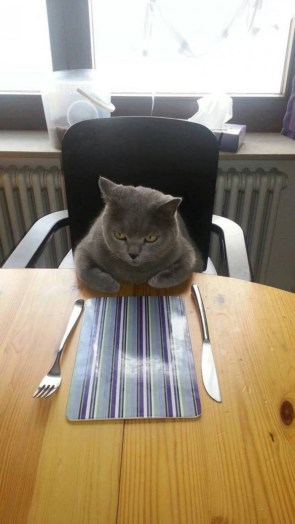 angry dinner cat