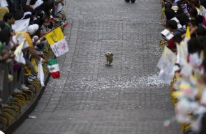 Magical Parade