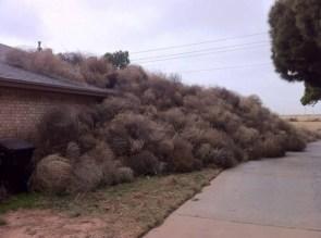 Tumbleweed collection
