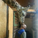giraffe kisses
