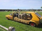 Sheep Bus