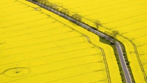 Yellow Fields of Canola Blooms along old highway