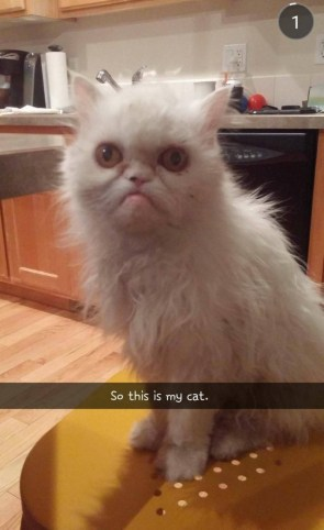 an ugly cat
