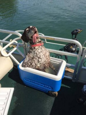 cooler cooled boat dog