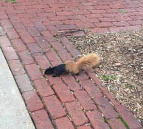 half a squirrel