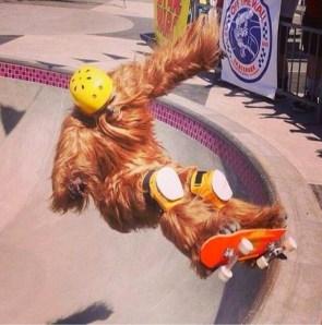 wookie on a skate board