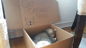 cat catcher 5000