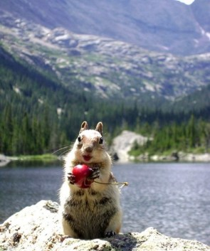 Cherry Squirrel