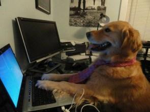 Developer Dog