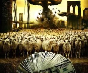 Sheep like money