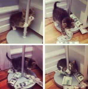 stripper pussy