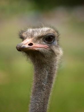 A hairy bird