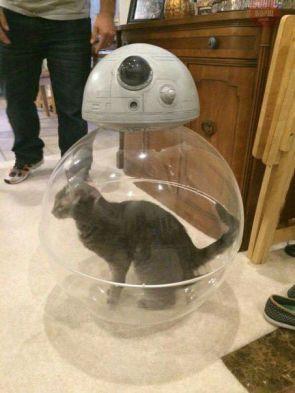 BB-8 Cat Toy
