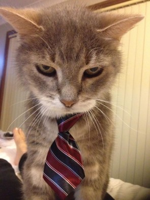 Business Cat is Serious