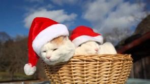 Christmas Cat Basket