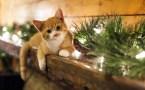 Christmas Light Kitty