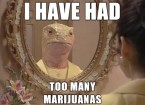 I have had too many marijuanas