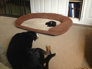 Kitten Bed
