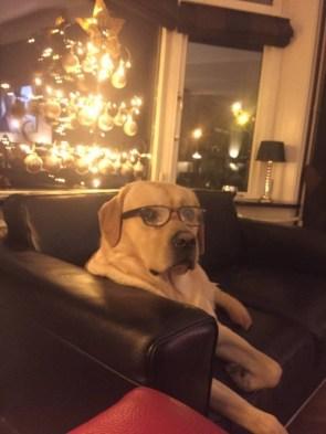 Smart Dog at christmas