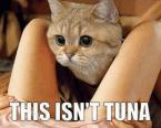 This isn't tuna