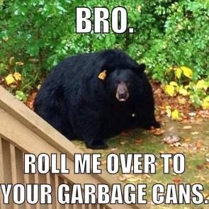 bro bear