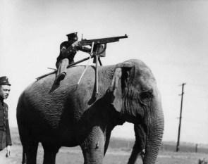 elephant heavy infantry