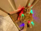 regretful christmas cat