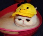 sad bath cat