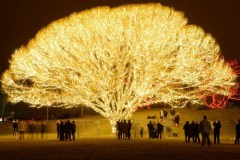 the tree of life in Draper Utah