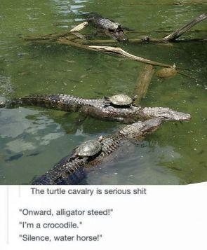 Turtle cavalry