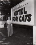It's like a Motel for Cats BUT It's a Cat Park