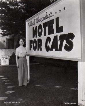 It's like a Motel for Cats BUT It's a Cat Park