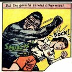 Don't tangle with a gorilla