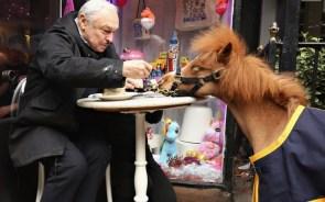 Pony Snack