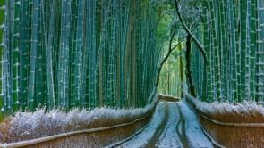Sagano Bamboo Forest – Arashiyama Kyoto, Japan